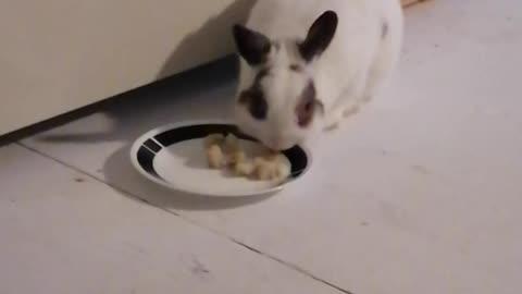 Chuck Bunny...39