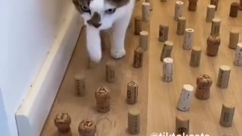 Daily cat video - 15
