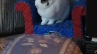 Chuck Bunny...9