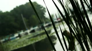 Reeds (Free to Use HD Stock Video Footage)