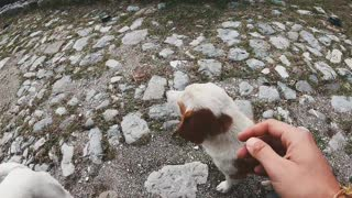 Petting Dogs Outdoor