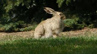 rabbit in forrest
