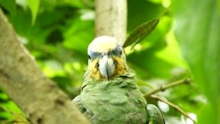 Parrot sleepy