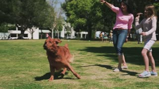 A Woman Training Her Dog