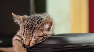 A beautiful cat is sleeping in my house