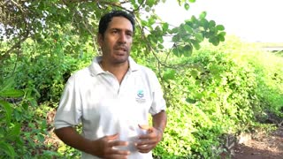 Hallan tortuga gigante en Galápagos que se creía extinta