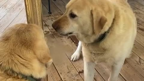 dog vs dog