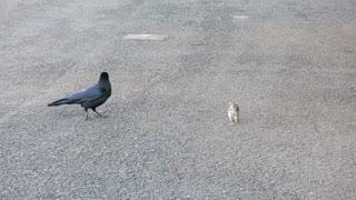 Le corbeau et le rat.