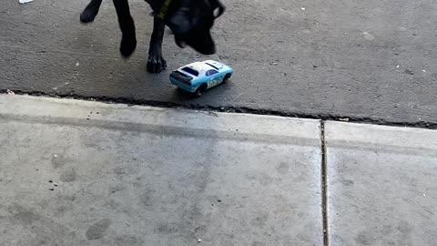 Remote Car vs Dog