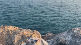 cat loves the sea