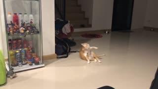 Cat Knows a Cool Trick