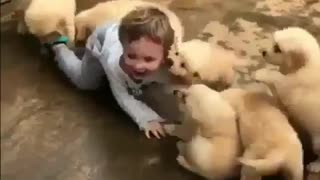 Very funny videos 1