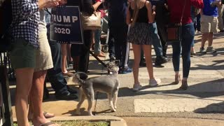 Trump Rally Austin, TX