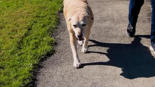 The Last Day| Sying Goodbye To my Family Dog