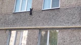 Crazy ninja cat