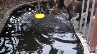 Smart dog retrieves their bowl from the water