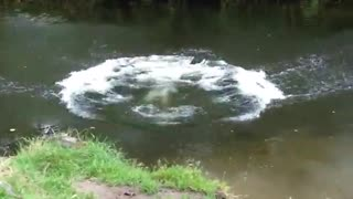 Black dog jumps and splashes in river