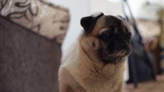 Watch the sad dog