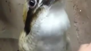What kind of bird???