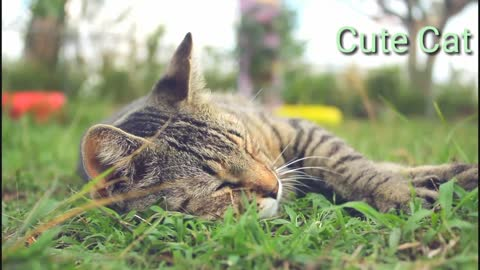 Cute cats and its funny acts