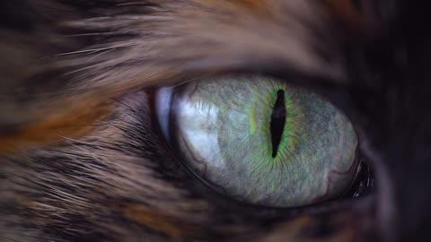 Brown Cat eye
