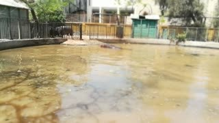 Speedy Under Cover Hippo Enjoys Water