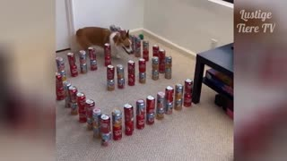 Funny Cats and Dogs Compilation 1