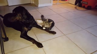 Cute cat and dog video, Purdy and Nala
