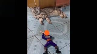 Animal accidents