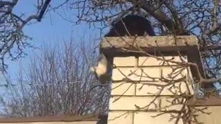 Unsuccessful Cat Escape