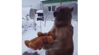 A Bear playing With a teddy