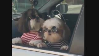 Perros y cachorros gracioso