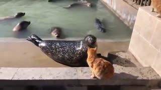 Cat slaps a seal must watch