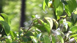 Leaves Blown By Wind