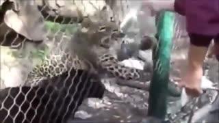 top 10 animals attack humans top 10 animals