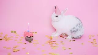happy Birthday rabbit