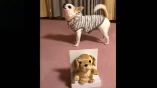 Pets having fun like never before