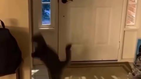 Insane parkour cat