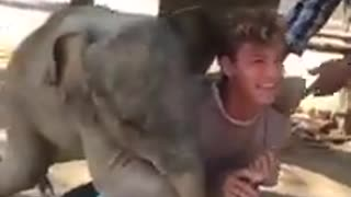 Excited Baby Elephant Plays With Guy While Trying to Climb on Him l