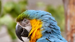 parrot videos,green parrot talking,green