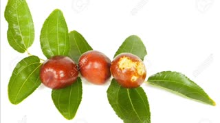 how to lose weight with jujube