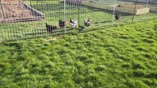Farm Update 4/5/2021