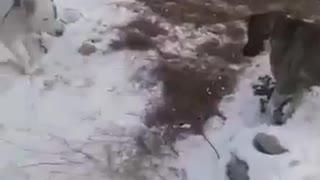 Global Warming In Kazakhstan