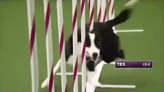 Train your Dog