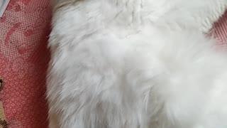 my kitty kit