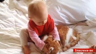 kitten taken
