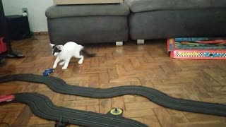 Slot Car Drives Cat Silly