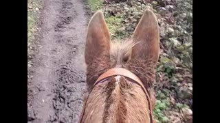 Oregon Horseback Riding