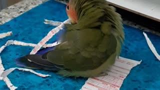 Parrot Paper Shredder