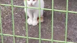 Conversation with the street cat